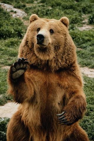 русский медведь картинки на рабочий стол