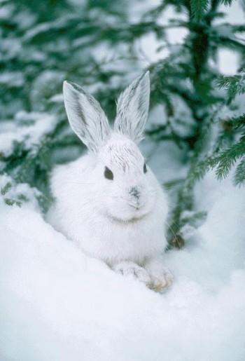 http://children.claw.ru/1_animals/content/jivnosty/zayac.jpg